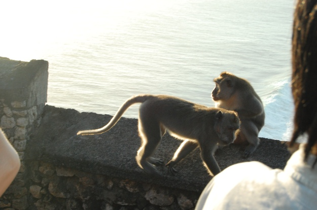 Please beware of the monkeys, they are trained to snatch from tourists.